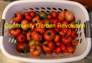 Community Garden Revolution for 2nd Largest Market