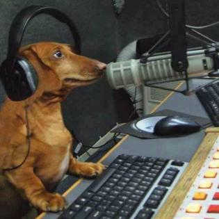 Veterinary Advice, Animal News & Views
